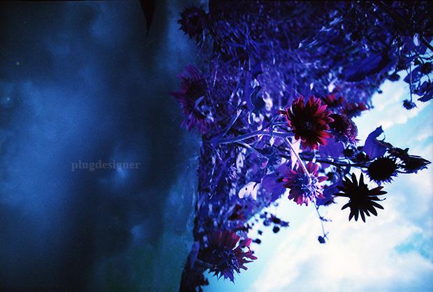 PurpleDays_1